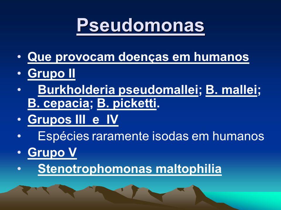 Pseudomonas Que provocam doenças em humanos Grupo II Burkholderia pseudomallei; B. mallei; B. cepacia; B. picketti. Grupos III e IV Espécies raramente