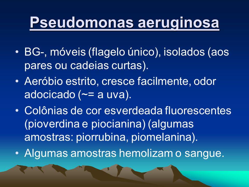 Pseudomonas aeruginosa BG-, móveis (flagelo único), isolados (aos pares ou cadeias curtas). Aeróbio estrito, cresce facilmente, odor adocicado (~= a u