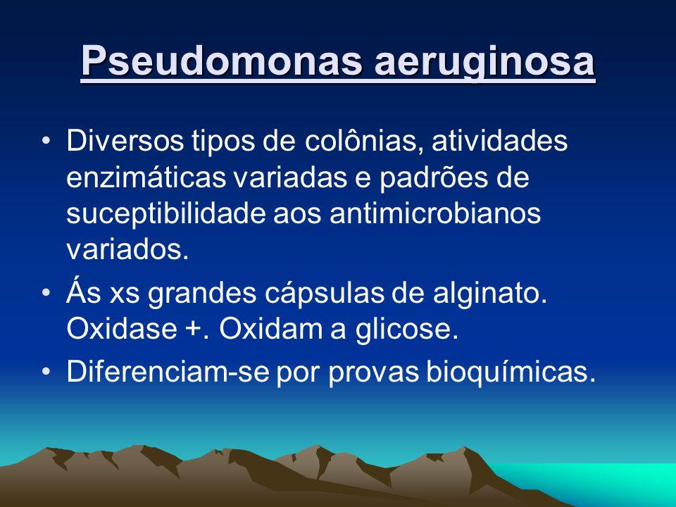 Pseudomonas aeruginosa Diversos tipos de colônias, atividades enzimáticas variadas e padrões de suceptibilidade aos antimicrobianos variados.