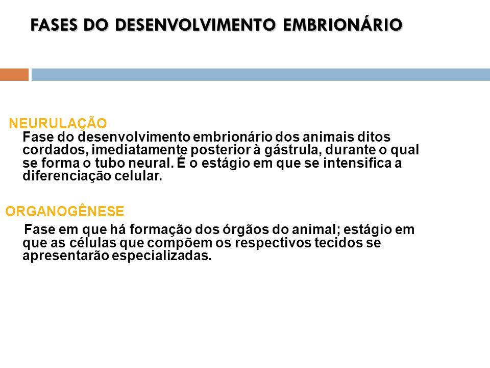 FASES DO DESENVOLVIMENTO EMBRIONÁRIO NEURULAÇÃO Fase do desenvolvimento embrionário dos animais ditos cordados, imediatamente posterior à gástrula, du
