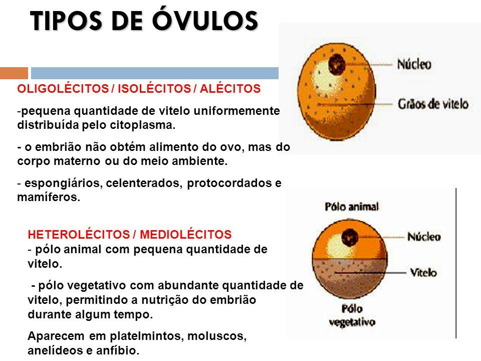 TIPOS DE ÓVULOS OLIGOLÉCITOS / ISOLÉCITOS / ALÉCITOS -pequena quantidade de vitelo uniformemente distribuída pelo citoplasma. - o embrião não obtém al