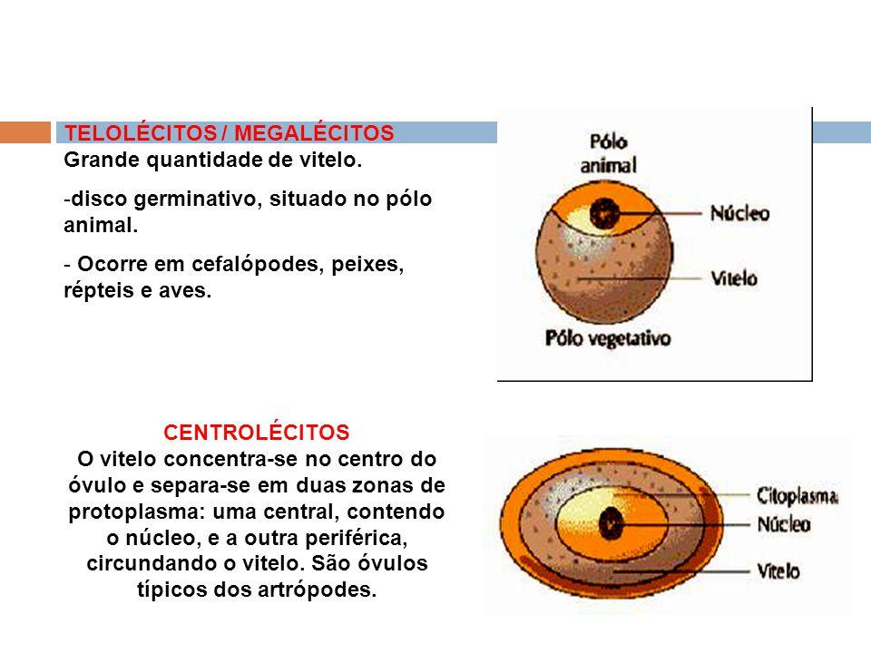 Anexos Embrionários 3