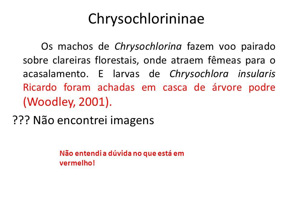 Chrysochlorininae Os machos de Chrysochlorina fazem voo pairado sobre clareiras florestais, onde atraem fêmeas para o acasalamento. E larvas de Chryso