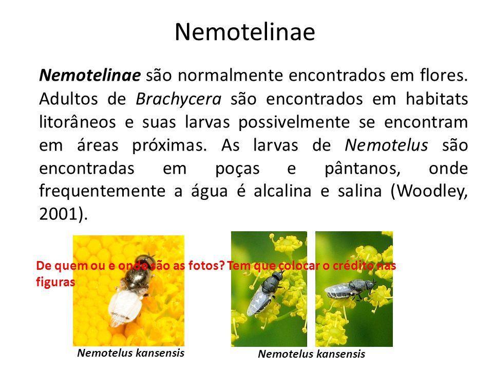 Nemotelinae Nemotelinae são normalmente encontrados em flores. Adultos de Brachycera são encontrados em habitats litorâneos e suas larvas possivelment