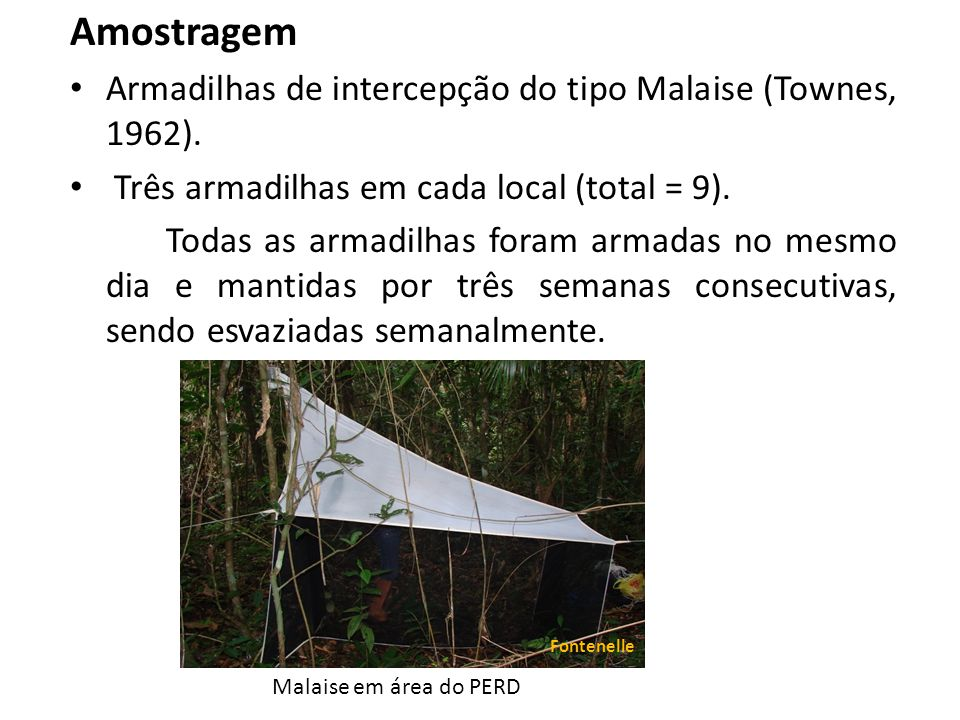 Amostragem Armadilhas de intercepção do tipo Malaise (Townes, 1962). Três armadilhas em cada local (total = 9). Todas as armadilhas foram armadas no m
