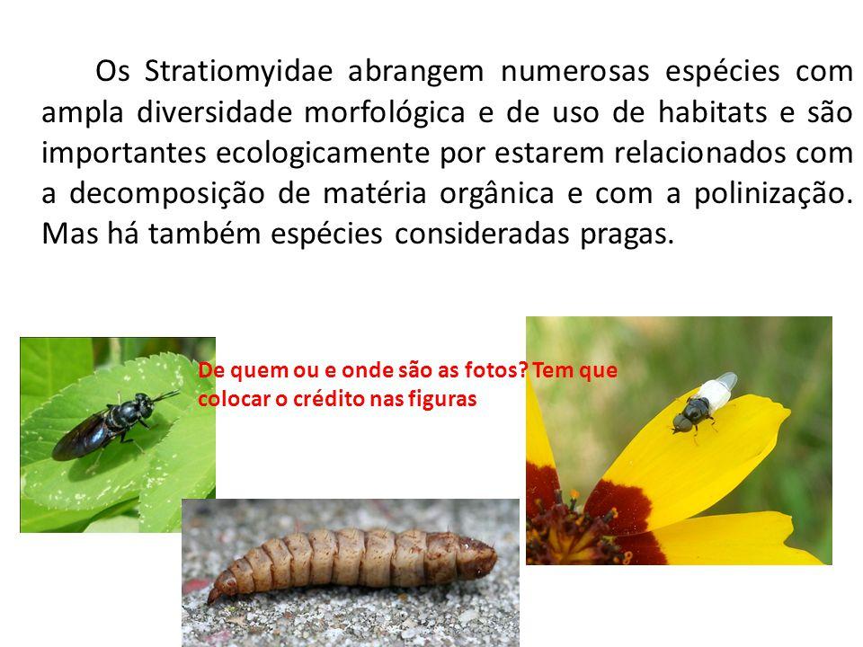 Os Stratiomyidae abrangem numerosas espécies com ampla diversidade morfológica e de uso de habitats e são importantes ecologicamente por estarem relac