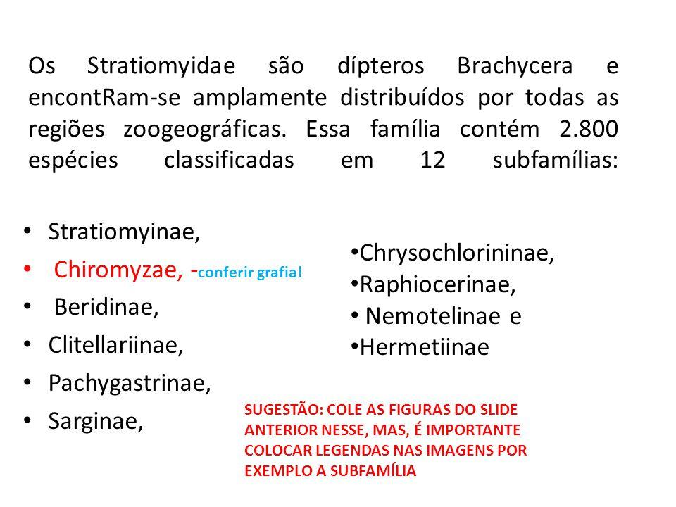 Os Stratiomyidae são dípteros Brachycera e encontRam-se amplamente distribuídos por todas as regiões zoogeográficas. Essa família contém 2.800 espécie
