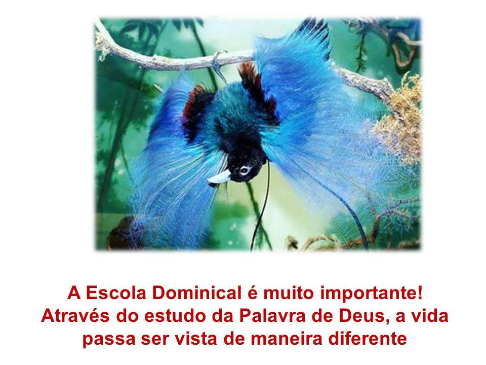 A Escola Dominical é muito importante! Através do estudo da Palavra de Deus, a vida passa ser vista de maneira diferente