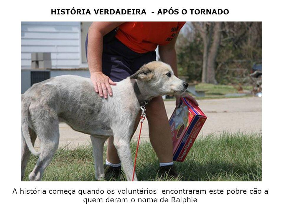 HISTÓRIA VERDADEIRA - APÓS O TORNADO A história começa quando os voluntários encontraram este pobre cão a quem deram o nome de Ralphie