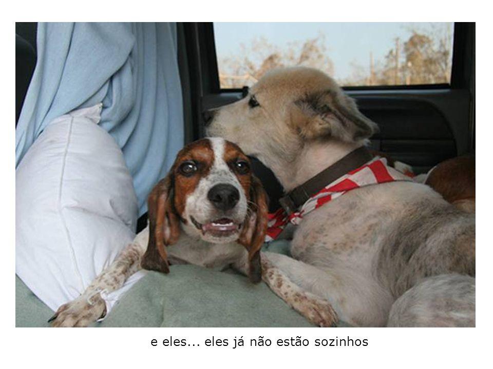 Ficam amigos instantâneamente, confortam-se um ao outro no carro