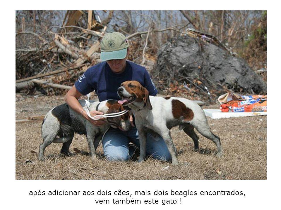 após adicionar aos dois cães, mais dois beagles encontrados, vem também este gato !