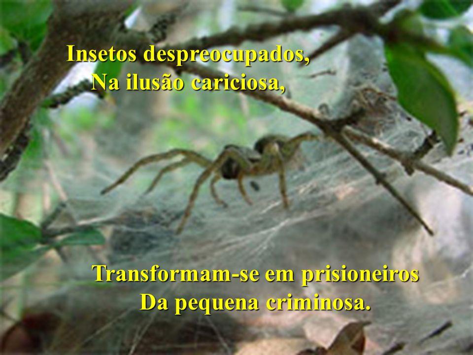 Insetos despreocupados, Na ilusão cariciosa, Transformam-se em prisioneiros Da pequena criminosa.