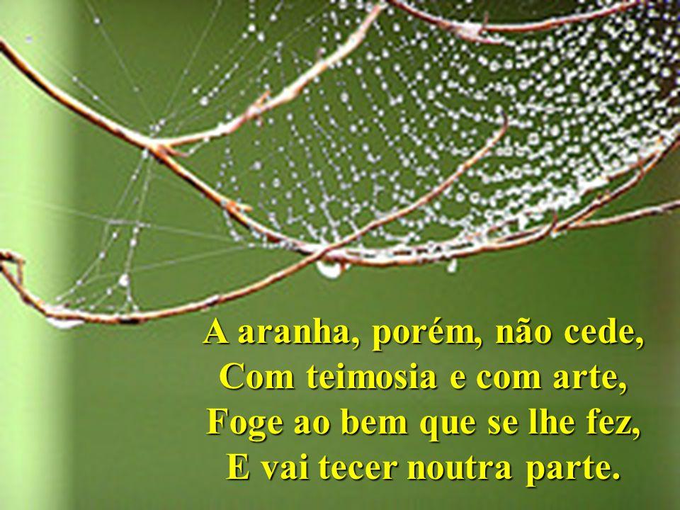 A aranha, porém, não cede, Com teimosia e com arte, Foge ao bem que se lhe fez, E vai tecer noutra parte.