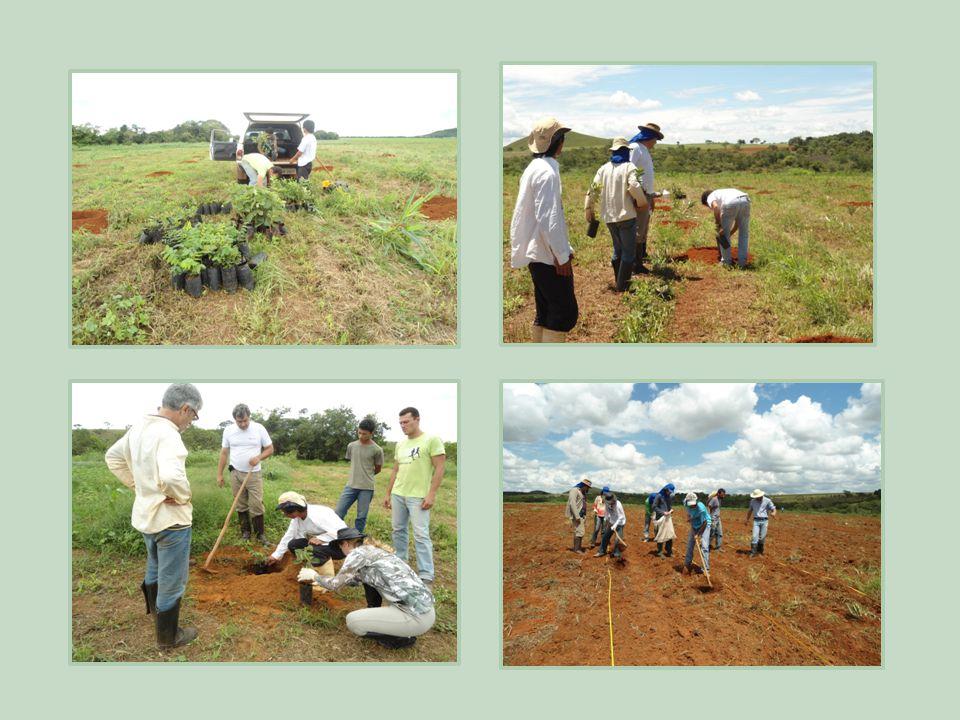 4) Agroecologia – Caiapônia, Goiás Parceria: Embrapa, Emater.