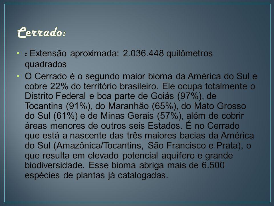 : Extensão aproximada: 2.036.448 quilômetros quadrados O Cerrado é o segundo maior bioma da América do Sul e cobre 22% do território brasileiro. Ele o