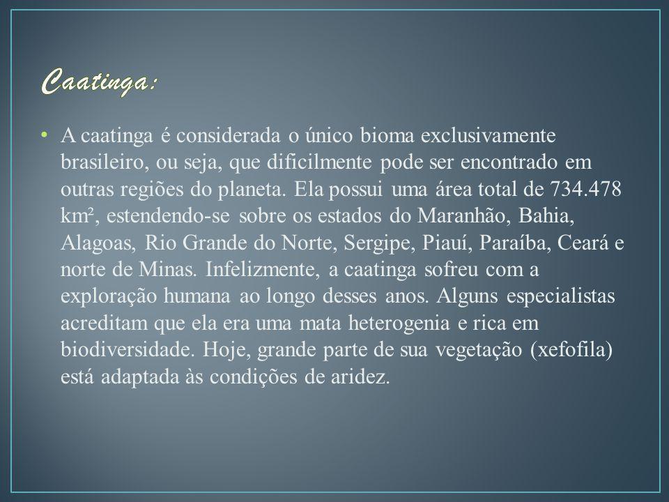 A caatinga é considerada o único bioma exclusivamente brasileiro, ou seja, que dificilmente pode ser encontrado em outras regiões do planeta.
