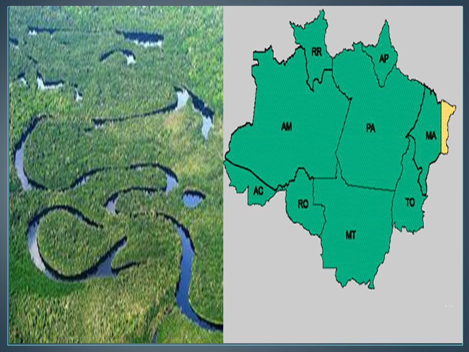 O Pantanal é uma das maiores planícies inundáveis da Terra, considerado Patrimônio Natural pelo Artigo 225 da Constituição Brasileira (1988) e Reserva da Biosfera pela UNESCO (2000).