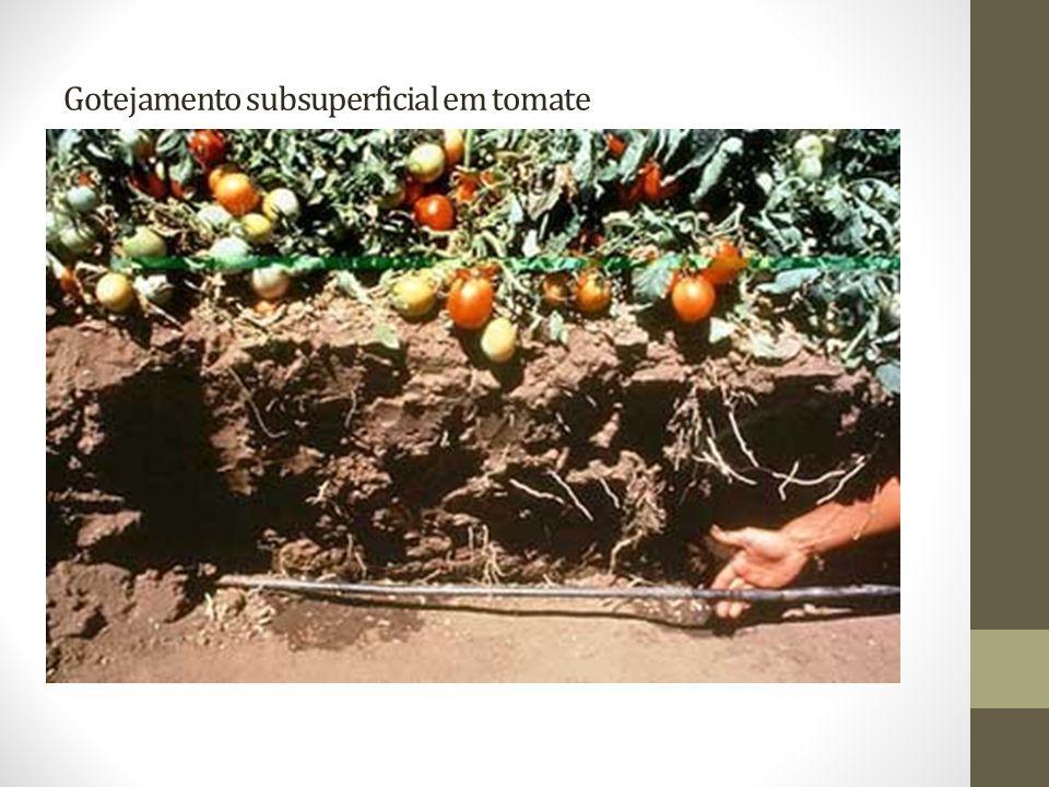 Gotejamento subsuperficial em tomate