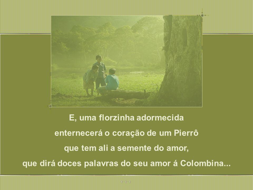 E, uma florzinha adormecida enternecerá o coração de um Pierrô que tem ali a semente do amor, que dirá doces palavras do seu amor á Colombina...