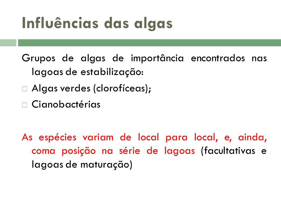 Influências das algas Grupos de algas de importância encontrados nas lagoas de estabilização: Algas verdes (clorofíceas); Cianobactérias As espécies variam de local para local, e, ainda, coma posição na série de lagoas (facultativas e lagoas de maturação)