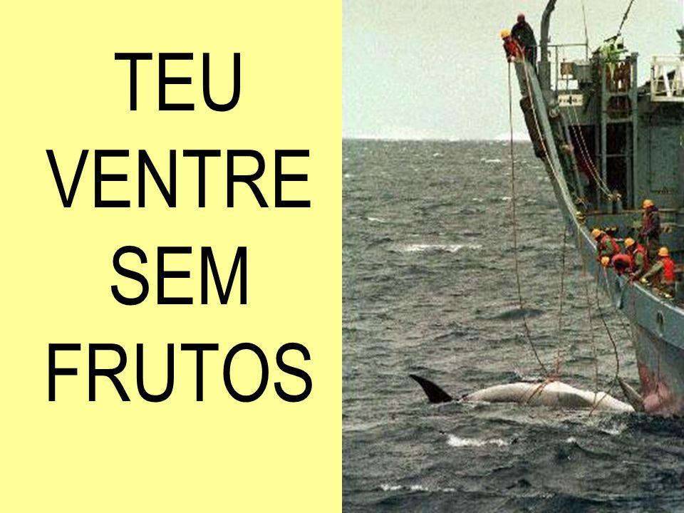 DE CUIDAR DO BROTO,