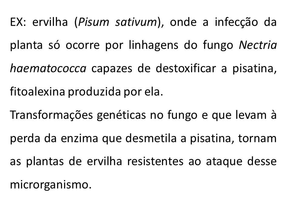 - Desde sua descoberta, inúmeras outras fitoalexinas foram obtidas de plantas cultivadas como feijão, soja, ervilha, batata, tomate, alface, algodão, arroz, cevada e banana, entre outras.