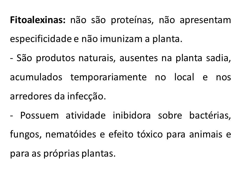 Fitoalexinas: não são proteínas, não apresentam especificidade e não imunizam a planta. - São produtos naturais, ausentes na planta sadia, acumulados