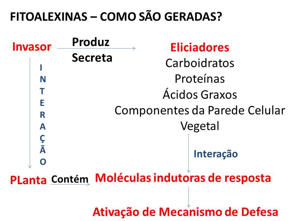 FITOALEXINAS – COMO SÃO GERADAS? Invasor PLanta Eliciadores Carboidratos Proteínas Ácidos Graxos Componentes da Parede Celular Vegetal Moléculas indut