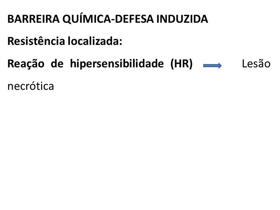 BARREIRA QUÍMICA-DEFESA INDUZIDA Resistência localizada: Reação de hipersensibilidade (HR) Lesão necrótica