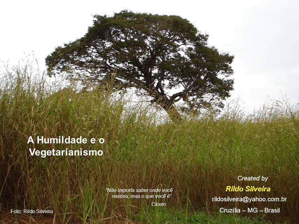 A Humildade e o Vegetarianismo Rildo Silveira Created by rildosilveira@yahoo.com.br Cruzília – MG – Brasil Foto: Rildo Silveira Não importa saber onde você nasceu, mas o que você é.
