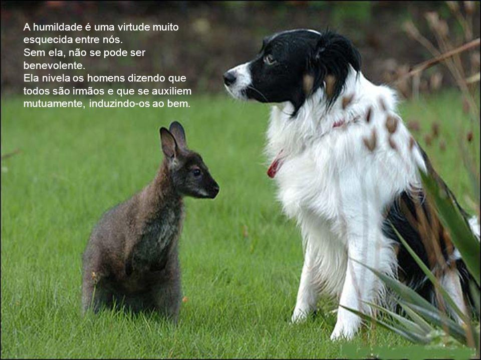 A Humildade e o Vegetarianismo Rildo Silveira Created by rildosilveira@yahoo.com.br Cruzília – MG – Brasil Foto: Rildo Silveira Não importa saber onde