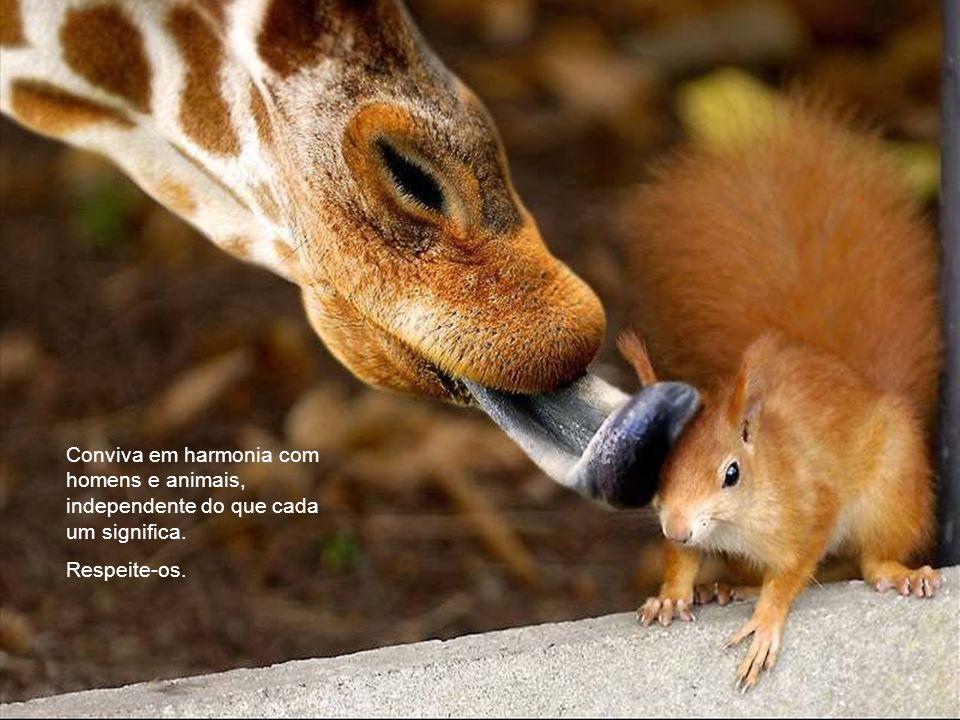 Conviva em harmonia com homens e animais, independente do que cada um significa. Respeite-os.