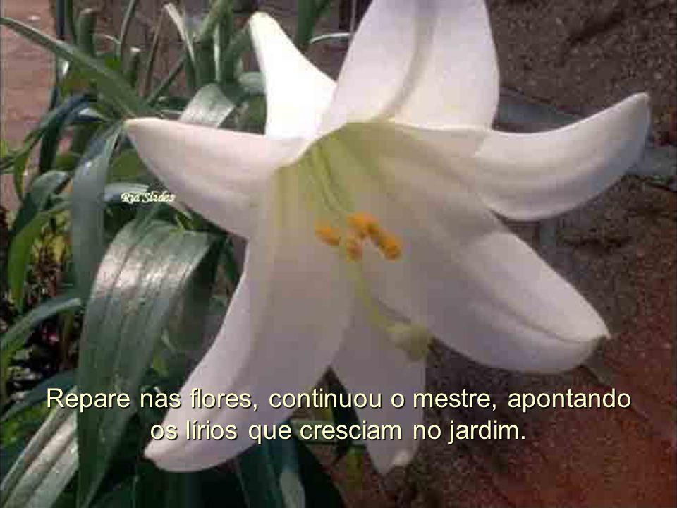 Repare nas flores, continuou o mestre, apontando os lírios que cresciam no jardim.