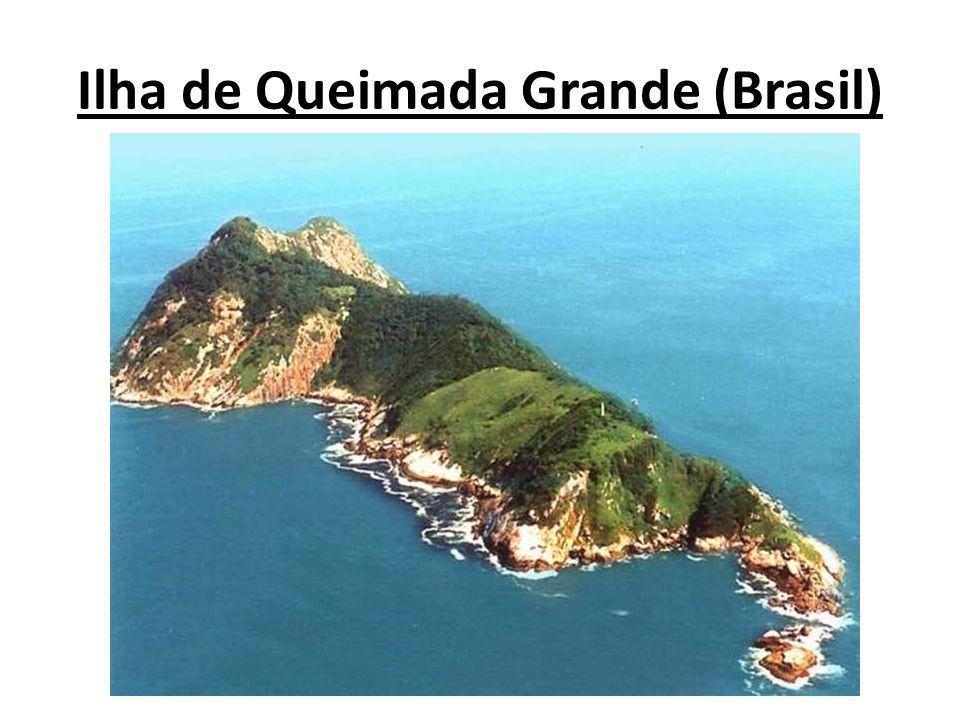 No litoral brasileiro, quase no centro do litoral sul paulista, está localizada a Ilha de Queimada Grande ou ilha da cobra.