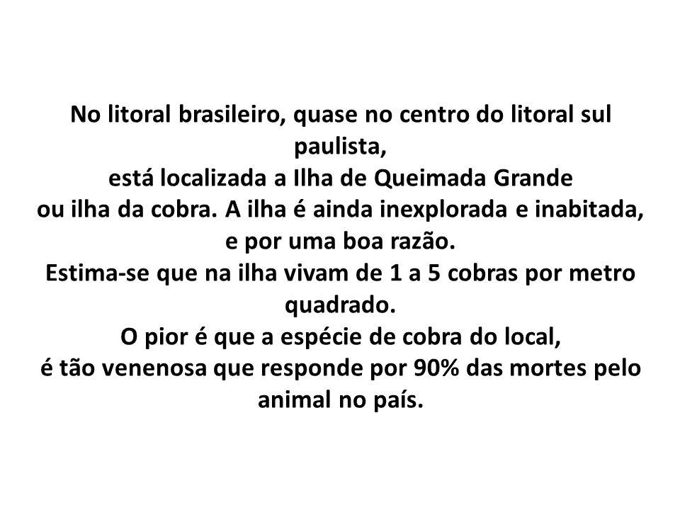 No litoral brasileiro, quase no centro do litoral sul paulista, está localizada a Ilha de Queimada Grande ou ilha da cobra. A ilha é ainda inexplorada