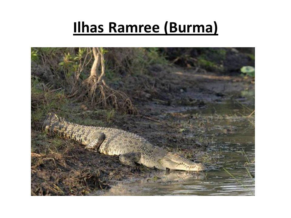 Esta ilha em Burma, é nada menos que um pântano gigante e lar de milhares de crocodilos gigantescos de água salgada, os mais perigosos do mundo.