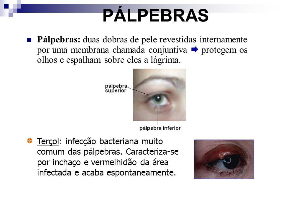 PÁLPEBRAS Pálpebras: duas dobras de pele revestidas internamente por uma membrana chamada conjuntiva protegem os olhos e espalham sobre eles a lágrima