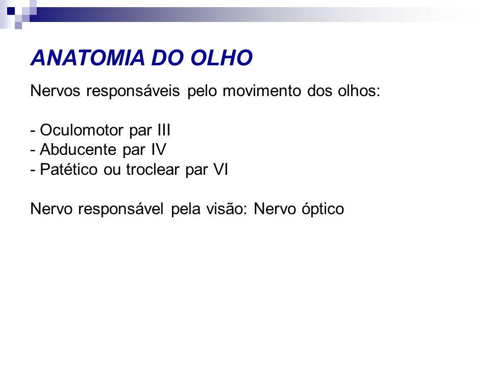 Nervos responsáveis pelo movimento dos olhos: - Oculomotor par III - Abducente par IV - Patético ou troclear par VI Nervo responsável pela visão: Nerv