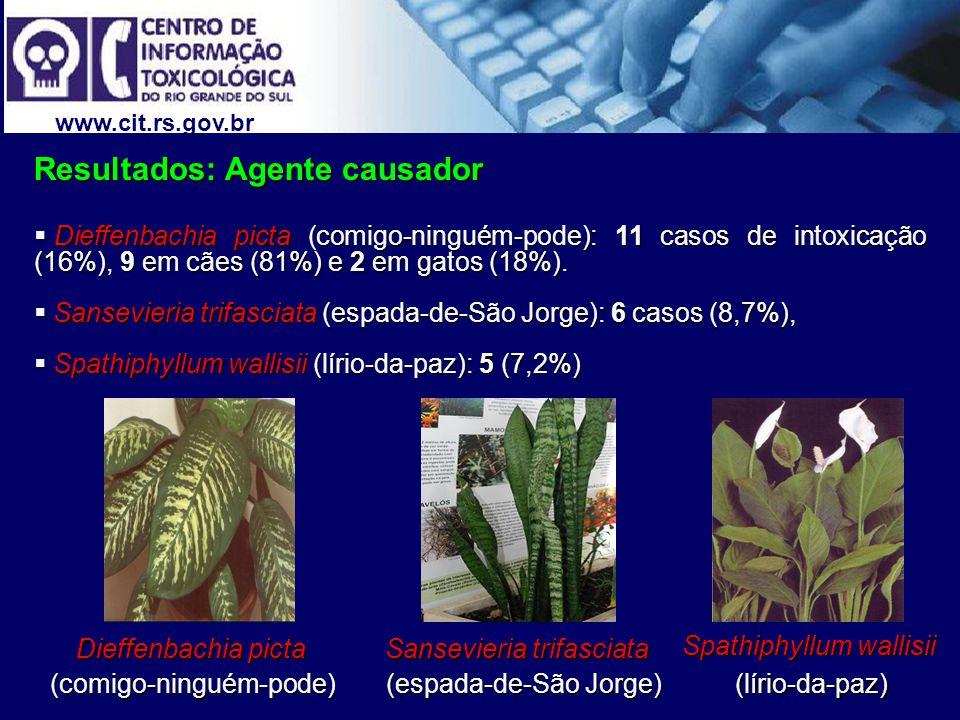 www.cit.rs.gov.br Resultados: Agente causador Dieffenbachia picta (comigo-ninguém-pode): 11 casos de intoxicação (16%), 9 em cães (81%) e 2 em gatos (