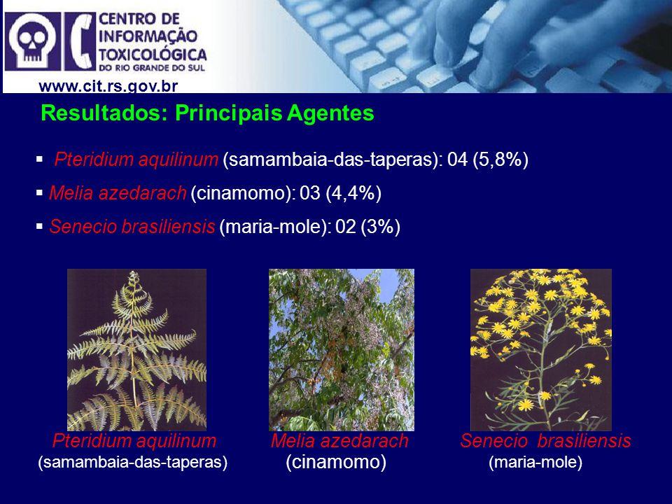 www.cit.rs.gov.br Senecio brasiliensisPteridium aquilinumMelia azedarach Pteridium aquilinum (samambaia-das-taperas): 04 (5,8%) Melia azedarach (cinam
