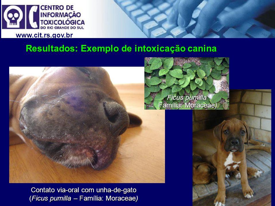 www.cit.rs.gov.br Contato via-oral com unha-de-gato (Ficus pumilla – Família: Moraceae) Resultados: Exemplo de intoxicação canina Ficus pumilla Famíli
