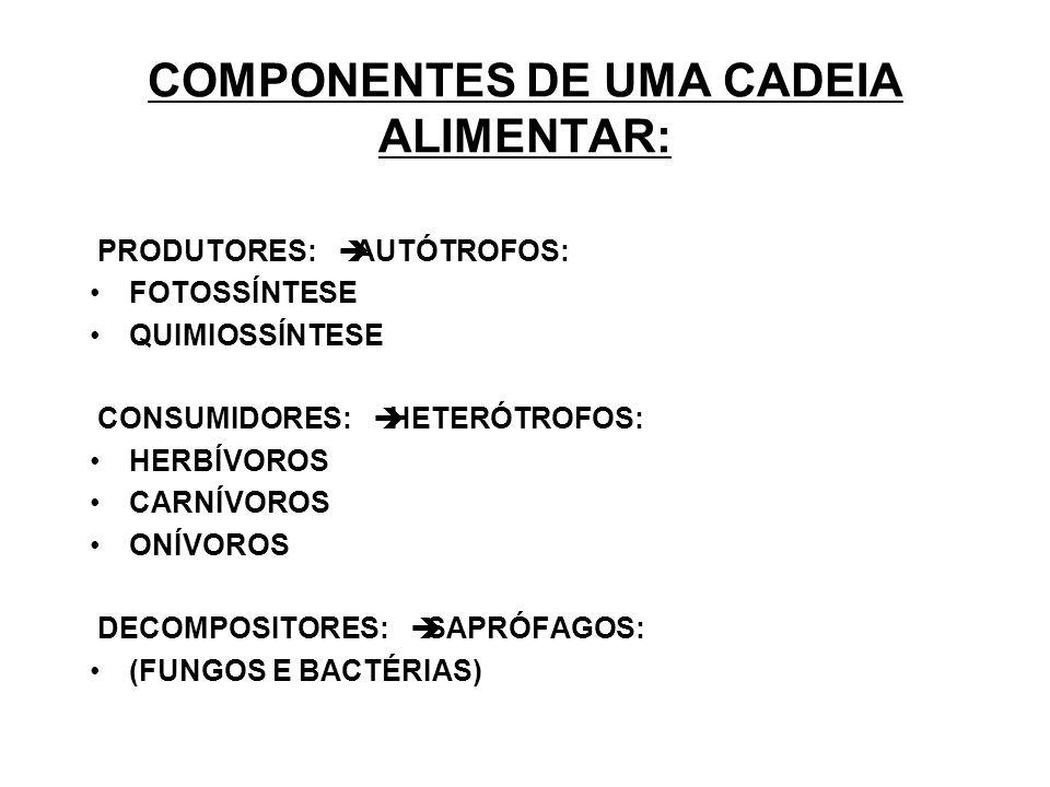 COMPONENTES DE UMA CADEIA ALIMENTAR: PRODUTORES: AUTÓTROFOS: FOTOSSÍNTESE QUIMIOSSÍNTESE CONSUMIDORES: HETERÓTROFOS: HERBÍVOROS CARNÍVOROS ONÍVOROS DECOMPOSITORES: SAPRÓFAGOS: (FUNGOS E BACTÉRIAS)