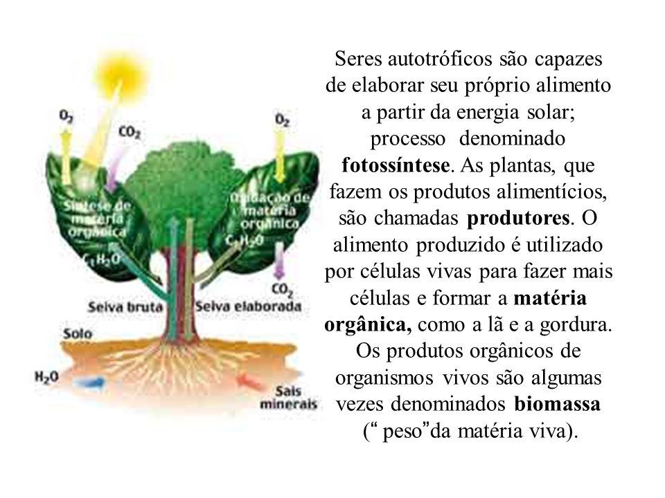 Seres autotróficos são capazes de elaborar seu próprio alimento a partir da energia solar; processo denominado fotossíntese. As plantas, que fazem os