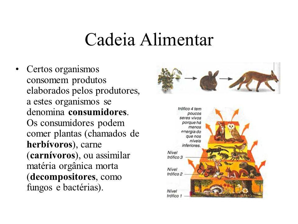 Cadeia Alimentar Certos organismos consomem produtos elaborados pelos produtores, a estes organismos se denomina consumidores. Os consumidores podem c