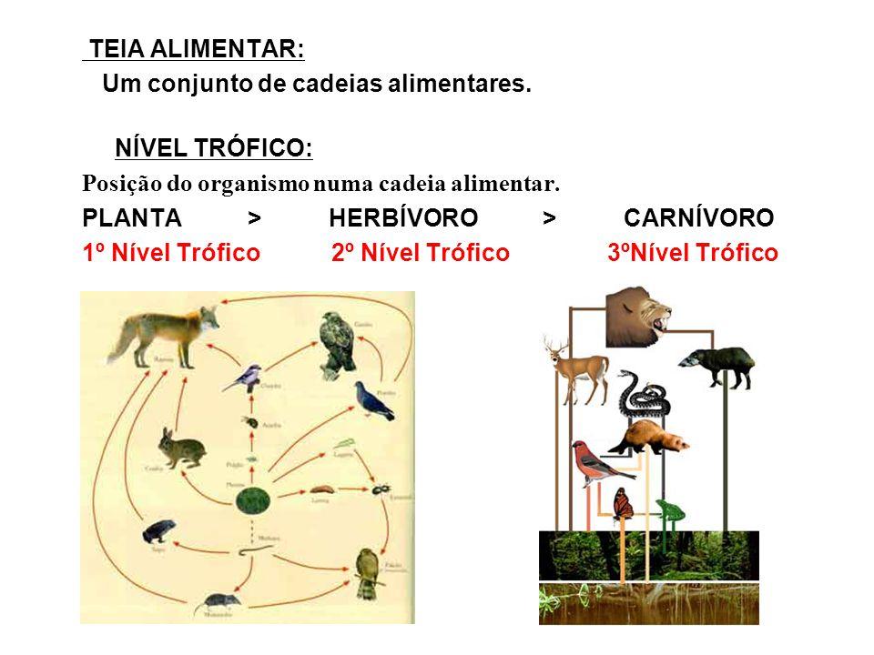 TEIA ALIMENTAR: Um conjunto de cadeias alimentares. NÍVEL TRÓFICO: Posição do organismo numa cadeia alimentar. PLANTA > HERBÍVORO > CARNÍVORO 1º Nível