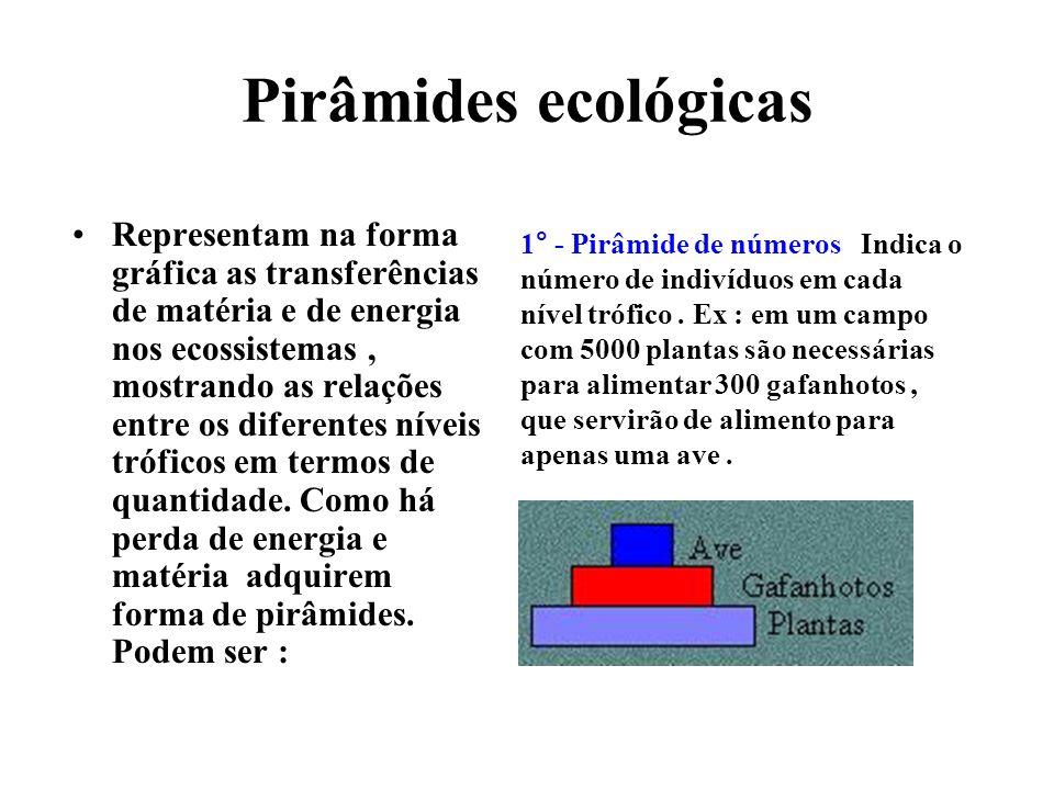 Pirâmides ecológicas Representam na forma gráfica as transferências de matéria e de energia nos ecossistemas, mostrando as relações entre os diferentes níveis tróficos em termos de quantidade.