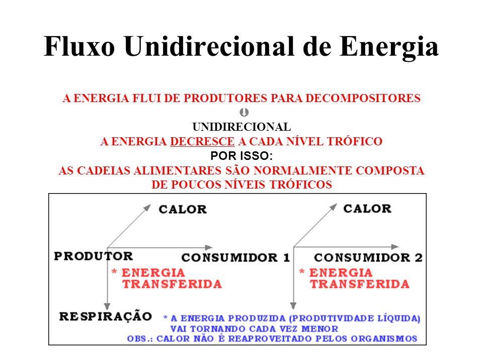 A ENERGIA FLUI DE PRODUTORES PARA DECOMPOSITORES UNIDIRECIONAL A ENERGIA DECRESCE A CADA NÍVEL TRÓFICO POR ISSO: AS CADEIAS ALIMENTARES SÃO NORMALMENTE COMPOSTA DE POUCOS NÍVEIS TRÓFICOS