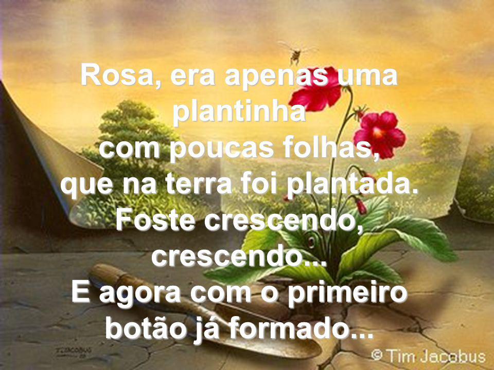 Rosa, era apenas uma plantinha com poucas folhas, que na terra foi plantada.