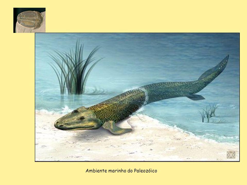 Ambiente marinho do Paleozóico