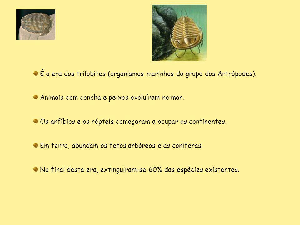 É a era dos trilobites (organismos marinhos do grupo dos Artrópodes). Animais com concha e peixes evoluíram no mar. Os anfíbios e os répteis começaram